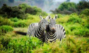 africa animals conservation romantisk dag med kæresten