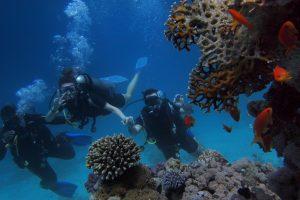 corals deep deep sea romantisk dag med kæresten