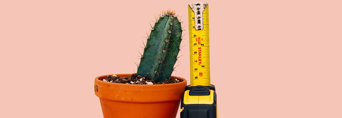cactus with measurement tape posing as short penis