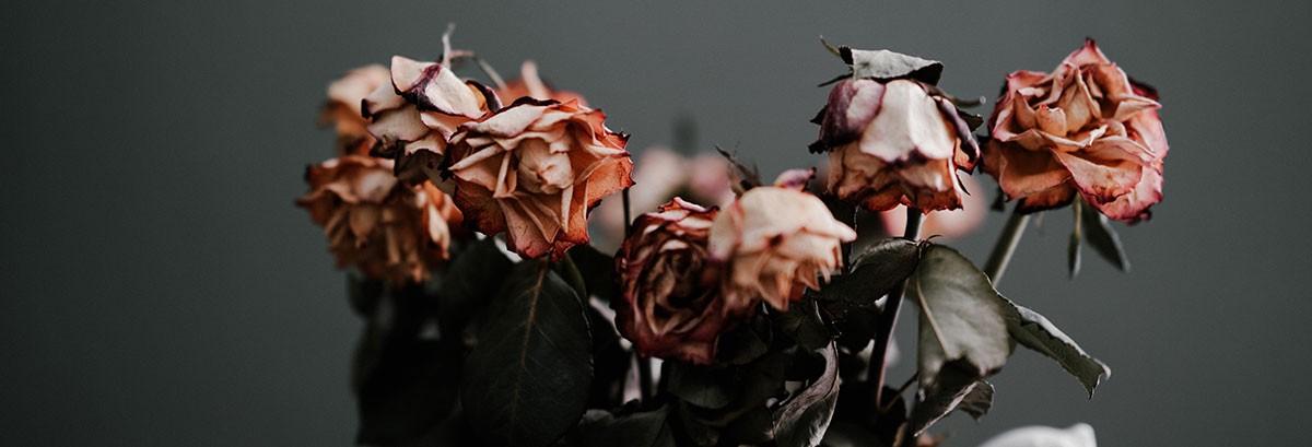 dead roses in vase representing jelqing failure