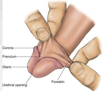 tickling the frenulum masturbation orgasm
