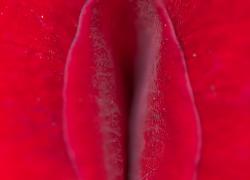 Trådløst sexlegetøj – Det bedste i test